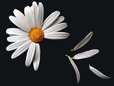 flor-deshojada