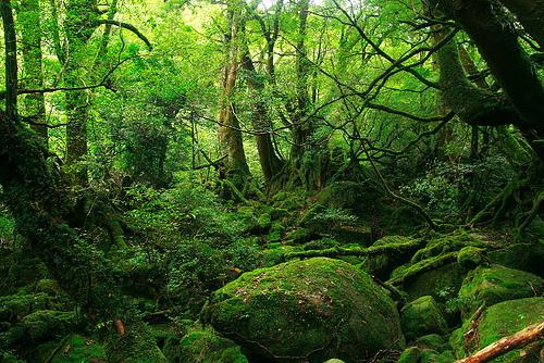 paz-verde